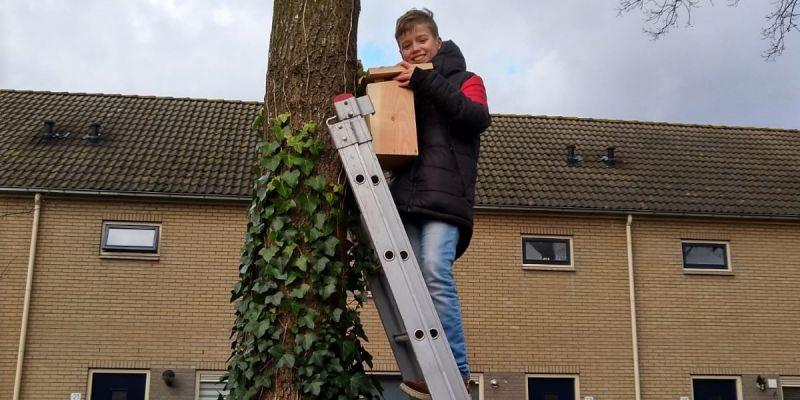 Leerlingen plaatsen vogelhuisjes in strijd tegen processierups